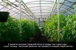Бизнес на выращивании – 65 бизнес идей по разведению и выращиванию